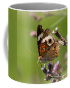 4467 - Butterfly Coffee Mug