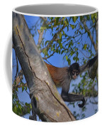 48- Capuchin Monkey Coffee Mug