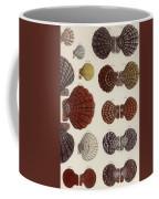 Aquatic Animals - Seafood - Shells - Mussels Coffee Mug