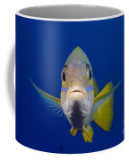 Bluestripe Snapper Coffee Mug