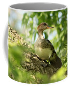 Immature Hooded Merganser Coffee Mug