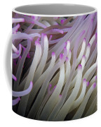 Micronesia, Marine Life Coffee Mug