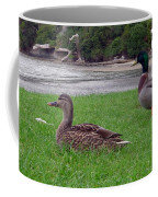 New Zealand - Mallard Ducks On The Grass Coffee Mug