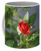 Red Rose Blooming Coffee Mug
