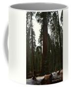 Giant Sequoia Trees Coffee Mug