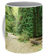 Fern Canyon Coffee Mug
