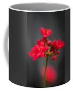 Jatropha Blossoms Painted  Coffee Mug