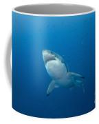 Male Great White Shark, Guadalupe Coffee Mug