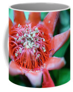 Royal Botanical Garden Of Madrid Coffee Mug
