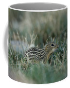 A 13-lined Ground Squirrel At The Henry Coffee Mug