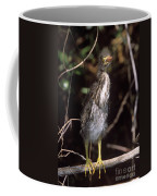 A Baby Green Heron Stretched Out Peering Into The Camera Coffee Mug