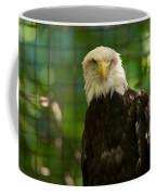A Bald Eagle At The Lincoln Zoo Coffee Mug