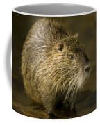 A Beaver From The Omaha Zoo Coffee Mug by Joel Sartore