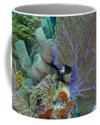 A Bi-color Damselfish Amongst The Coral Coffee Mug