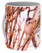 Western Scrub Jay Coffee Mug
