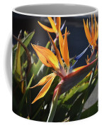 A Bunch Of Bird Of Paradise Flowers Bloomed  Coffee Mug
