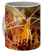 A Cleaner Shrimp Perches On An Exposed Coffee Mug