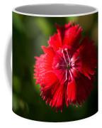 A Close Up Of A Dianthis Flower Coffee Mug