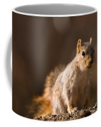 A Close-up Of A Fox Squirrel Sciurus Coffee Mug by Joel Sartore