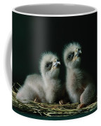 A Close-up Shows Two Southern American Coffee Mug by Joel Sartore
