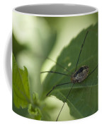 A Daddy Longlegs Spider Sits On A Leaf Coffee Mug