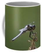 A Dragon Fly Contemplating  Coffee Mug