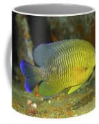 A Dusky Damselfish Offshore From Panama Coffee Mug by Michael Wood