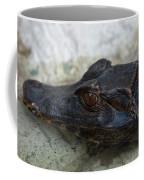 A Dwarf Caiman Paleosuchus Palepebrosus Coffee Mug