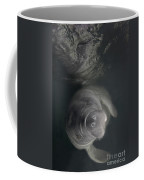 A Florida Manatee In The Warm Waters Coffee Mug