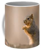 A Fox Squirrel Sciurus Niger Finds Coffee Mug by Joel Sartore