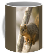 A Fox Squirrel Sciurus Niger Perches Coffee Mug