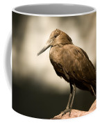 A Hammerkop At The Lincoln Childrens Coffee Mug