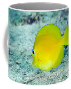 A Juvenile Blue Tang Searching Coffee Mug by Terry Moore