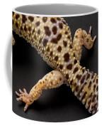 A Leopard Gecko Eublpharis Macularis Coffee Mug