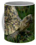 A Leopard Tortoise At The Lincoln Coffee Mug