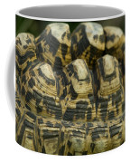 A Leopard Tortoise On The Move Coffee Mug