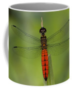 A Male Forest Chaser Dragonfly Rests Coffee Mug