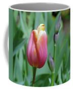A New Tullip  Coffee Mug