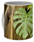A Philodendron Grows On The Side Coffee Mug