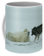 A Polar Bear Lolls On His Back While Coffee Mug by Norbert Rosing