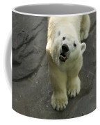A Polar Bear Looks Up At Its Observers Coffee Mug