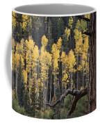 A Ponderosa Pine Tree Among Aspen Trees Coffee Mug