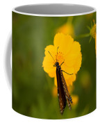 A Queen Butterfly At The Lincoln Coffee Mug