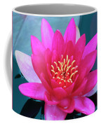 A Red And Yellow Water Lily Flower Coffee Mug