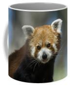 A Red Panda Ailurus Fulgens At Zoo Coffee Mug