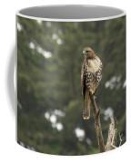 A Red-tailed Hawk Juvenile Coffee Mug