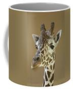 A Reticulated Giraffe Makes A Slanted Coffee Mug
