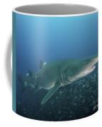 A Sand Tiger Shark Above A School Coffee Mug