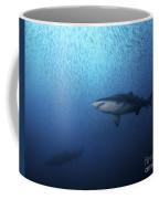 A Sand Tiger Shark And School Of Cigar Coffee Mug