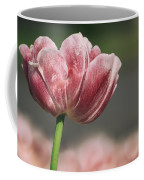 A Soft Tulip In Focus Coffee Mug